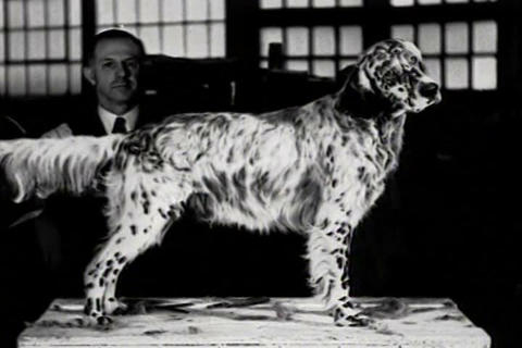 A dog show attracts attention in 1934 Live Action