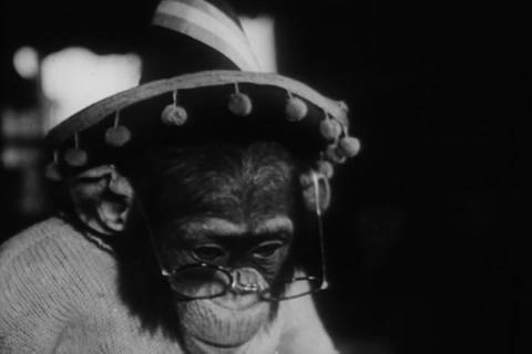 Hilarious animal antics from the 1950s Footage