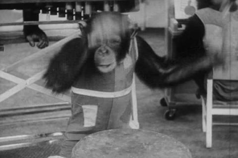 Hilarious animal antics from the 1950s Live Action