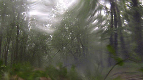 Rain and hail in the deciduous forest. Full HD Footage