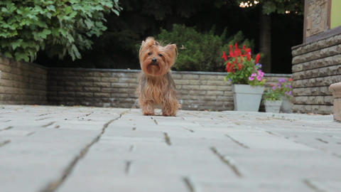 Dog Play stock footage