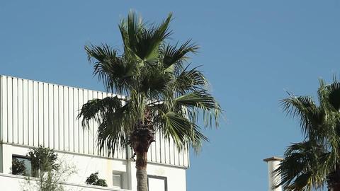 palms Animation