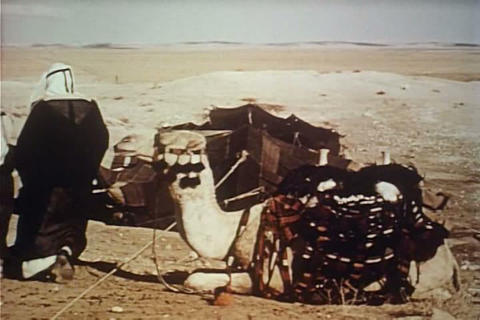 The life of a Bedouin herdsman is profiled in 1957 Live Action