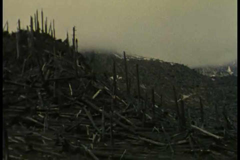 Life returns to Mt. Saint Helens after the 1980 er Footage