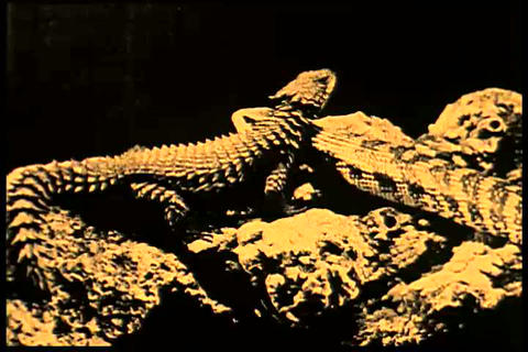 A 1920s silent film extolls the science of evoluti Footage