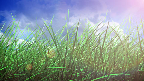 Grass and sky Stock Video Footage