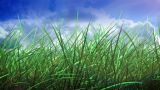 Grass And Sky stock footage