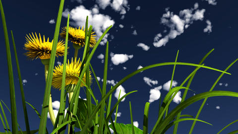 yellow flower and white clouds Stock Video Footage