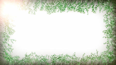 Camomile frame white Animation