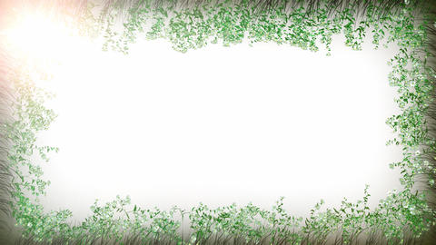 Camomile frame white Stock Video Footage