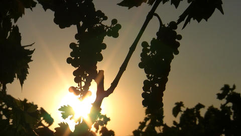Wine 01 Stock Video Footage