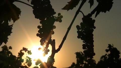 Wine 01 Footage