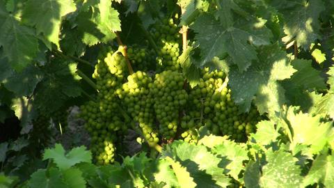 wine 03 Stock Video Footage