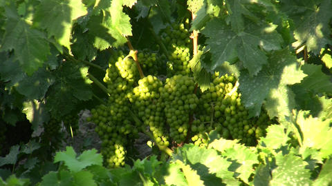 wine 03 Footage