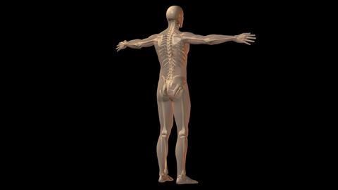 db skeleton man 01 hd1080 Stock Video Footage
