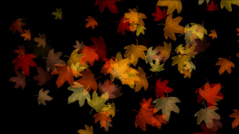 foliage Animation