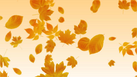 Falling Leaves stock footage