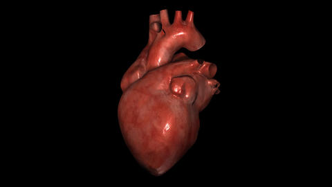 Realistic Heart Stock Video Footage