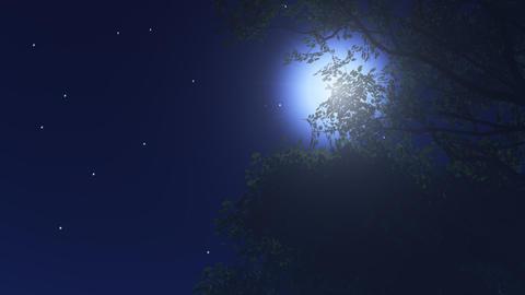 night stars 10 Stock Video Footage