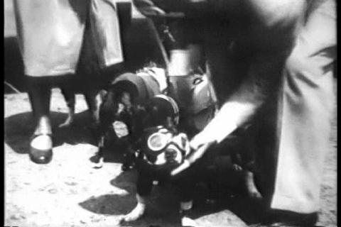 Dogs travel by airplane in 1930 Footage