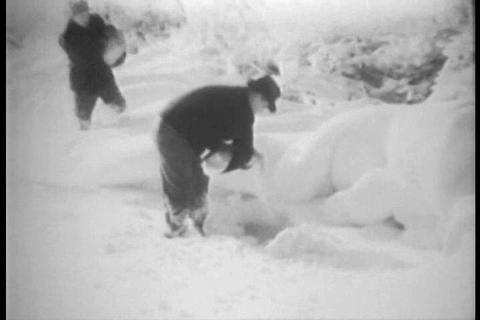 A man feeds starving pheasants in winter in 1929 Footage