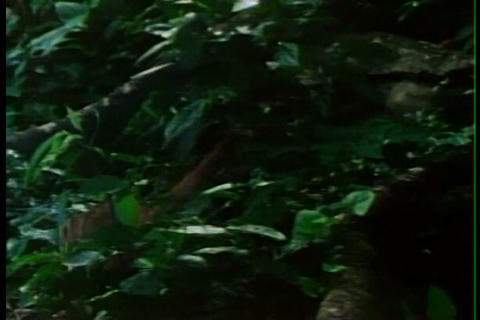 Equatorial rainforests are an ideal target for log Live Action