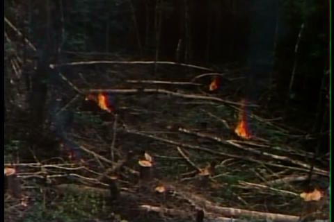 Natives Practice Slash And Burn Agriculture In The stock footage