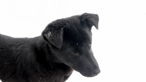 puppy on a white background Footage