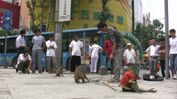 Animal torture in China, monkeys on the streets Footage