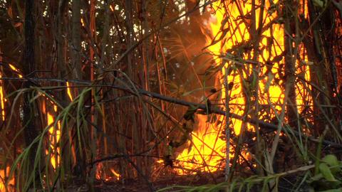 Burning Forest Live Action