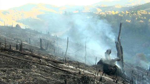 Burnt Field Footage