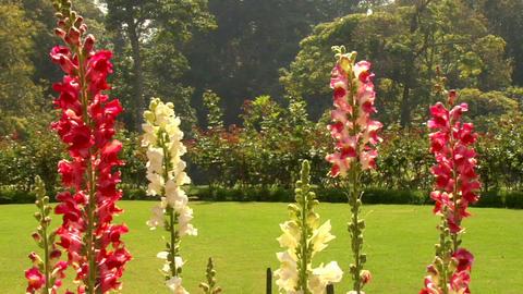 Lovely Garden Footage
