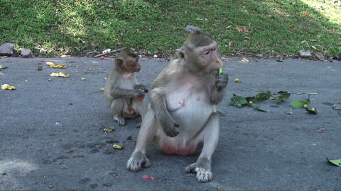 Mother and Baby Monkey Footage
