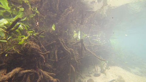 Aquatic plant Footage