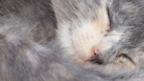 Close Up Sleeping Cat stock footage