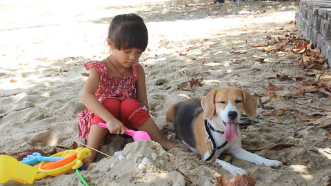 good beagle dog and little girl Live Action