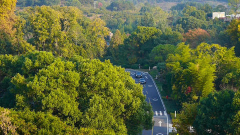 aerial view of hilly forest road at autumn,cars running on road Animation