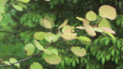 Aspen branch Footage