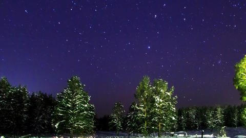 Forest poses a starry sky. Panorama. Time Lapse Footage