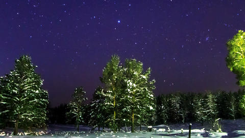 Pines under the stars. The camera zooms. Time Laps Footage