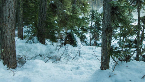 Dolly Shot In The Forest With Snow stock footage