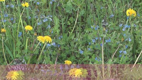 Spring wildflowers Footage