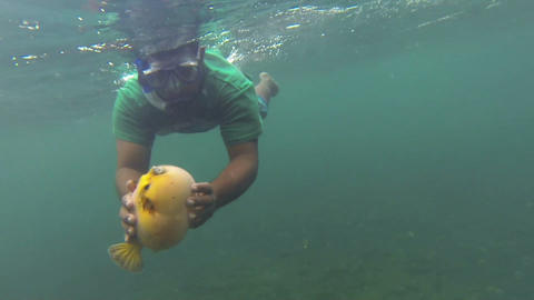 Diver holding an angry pufferfish in the bottom of Footage