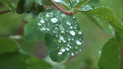 Raindrops on leaf Footage