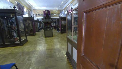 The rooms of the Museum. Kunstkamera. Saint-Peters Footage