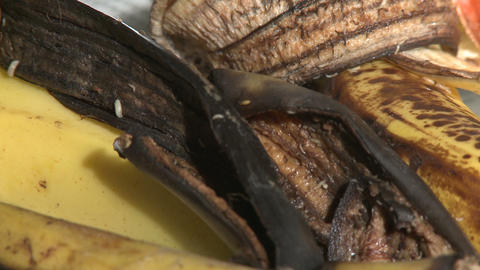 Maggots Devouring Banana Peel Footage