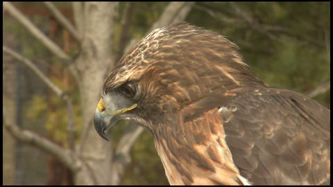 Hawk 1 Footage