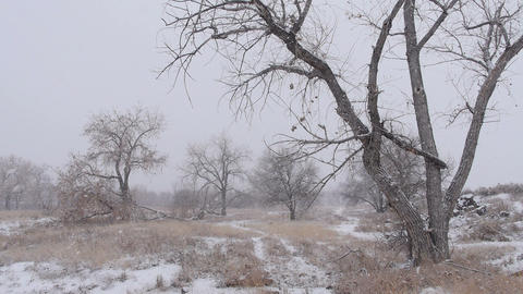 Winter Snowstorm Landscape Footage