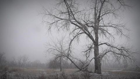 Melancholy Winter Landscape 1 Footage