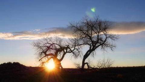 Cottonwood Tree Sunrise Time-lapse Footage